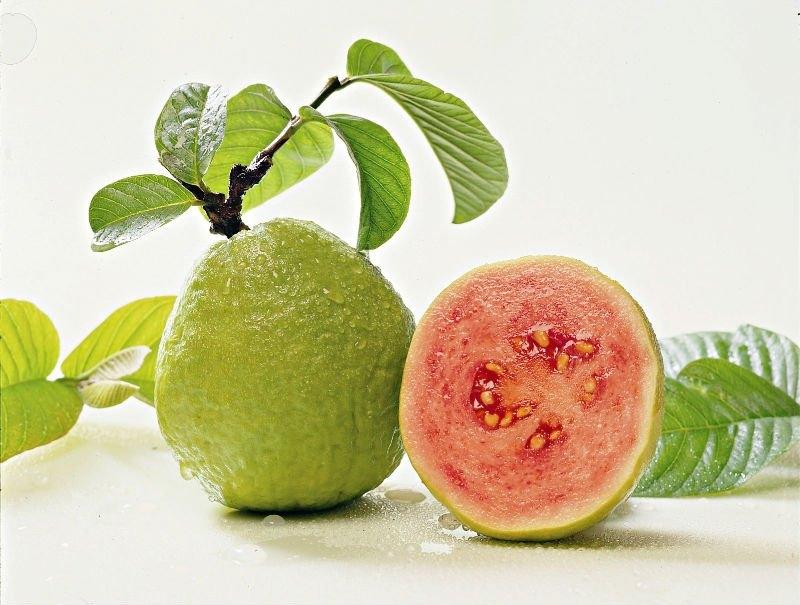 ỔI giàu dinh dưỡng và thơm ngon