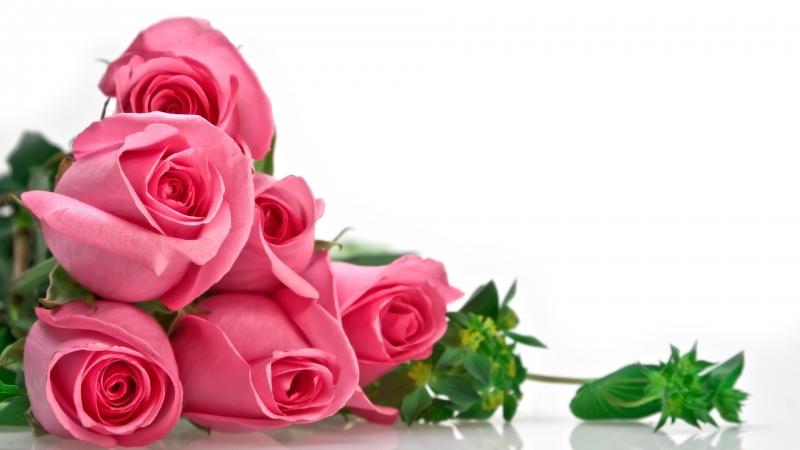Hoa hồng - món quà 8/3 đầy ý nghĩa