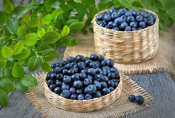 Việt quất là một trong những loại quả cung cấp nhiều chất chống oxy hoá nhất