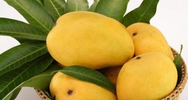 Xoài khi chín có màu vàng tươi như ánh nắng, hương thơm ngọt ngào mà thanh khiết.