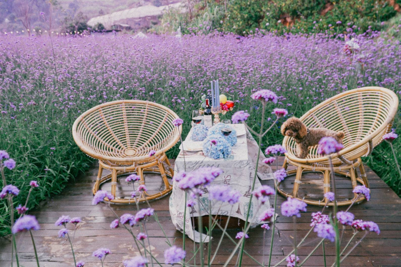 Khung cảnh tuyệt đẹp với cánh đồng hoa rộng lớn