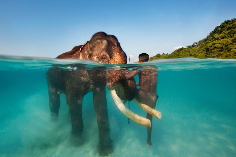 Một người dân Ấn Độ ngồi trên ngà voi để vượt sông tại quần đảo Andaman và Nicobar
