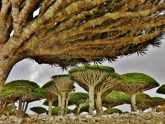 Quần đảo Socotra