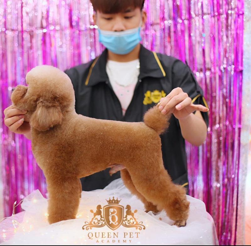 Queen Pet Shop