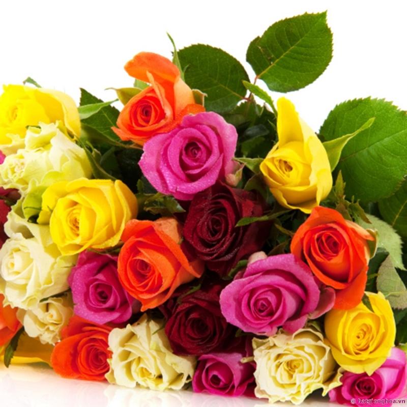 Với thông điệp cám ơn nửa kia cũng như tình yêu của họ, bạn hãy tặng tổng 12 bông hoa hồng