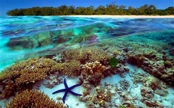 Rạn san hô Great Barrier (Úc)