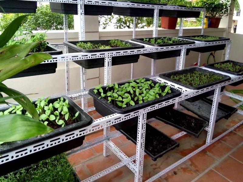Dịch vụ trồng rau Rau sạch Đà Nẵng