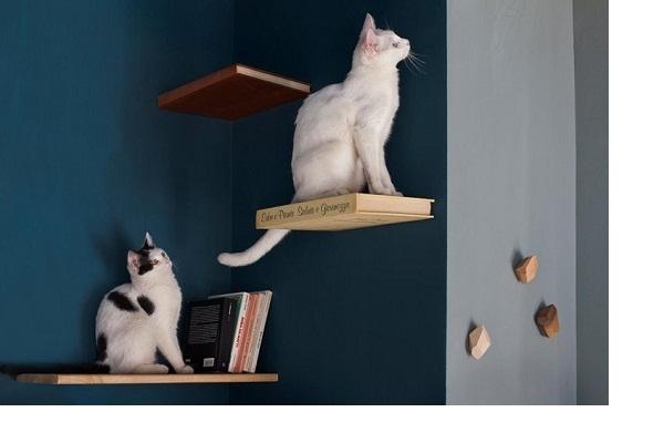 Romeow Cat Bistrot là một quán cà phê mèo