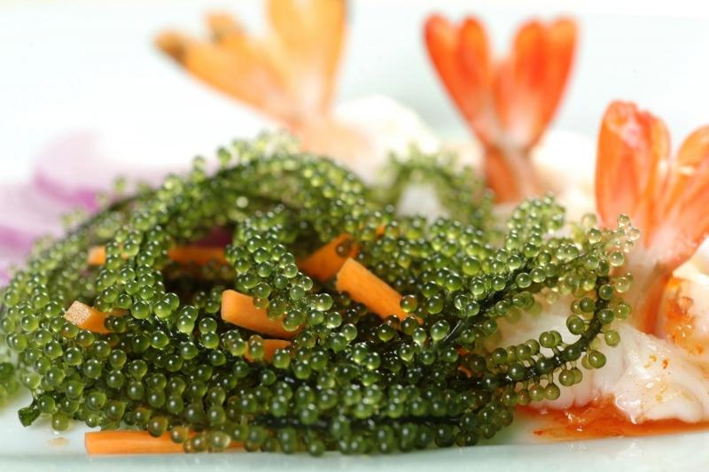 Món xà lách rong biển và tảo biển