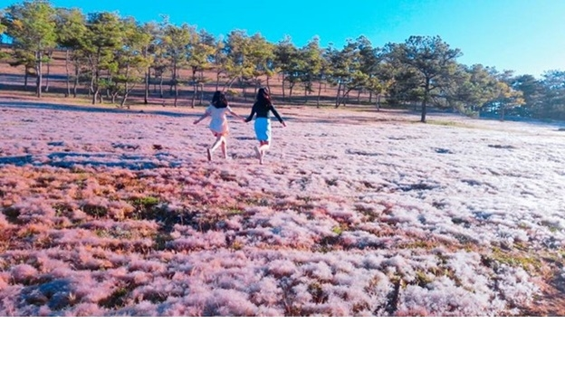 Đồi cỏ hồng lãng mạn ở Đà Lạt (nguồn: dulich.vnexpress.net)