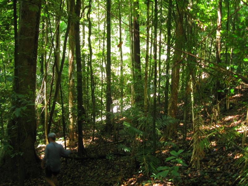 Một góc hệ thực vật ở rừng Daintree