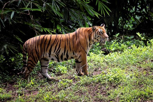 Rừng mưa nhiệt đới Sumatra này nuôi dưỡng tới 201 loài động vật quý hiếm