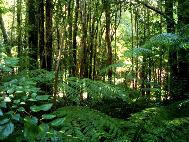 Một góc rừng Valdivian