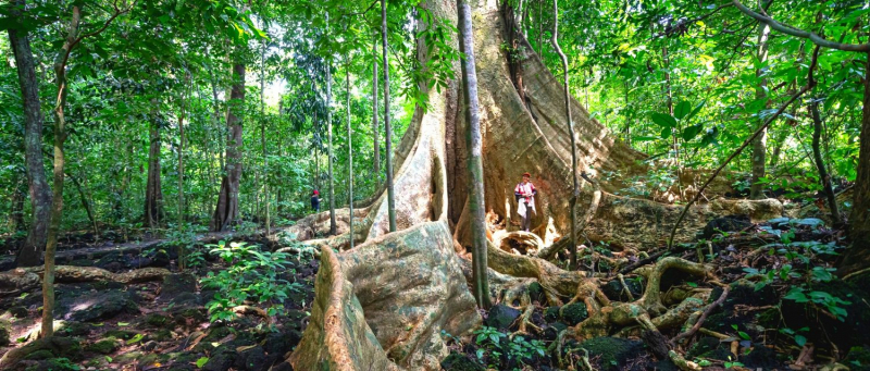 Rừng Nam Cát Tiên
