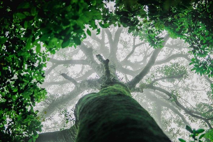 Rừng nguyên sinh Tam Đảo