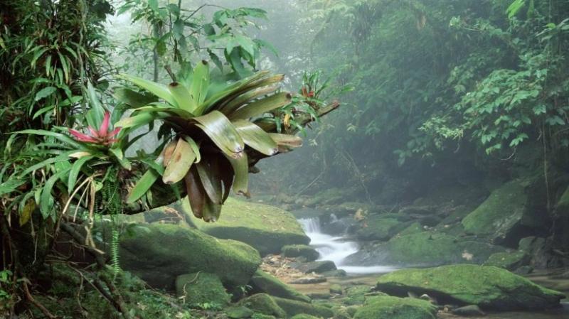 Rừng nhiệt đới Brazil có lượng oxy nhiều nhất thế giới? Hoàn toàn sai