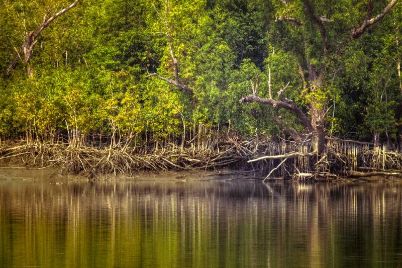Các cây ngập mặn của rừng Sundarbans