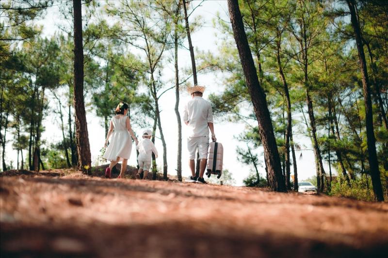 Rừng thông Bồ Bồ