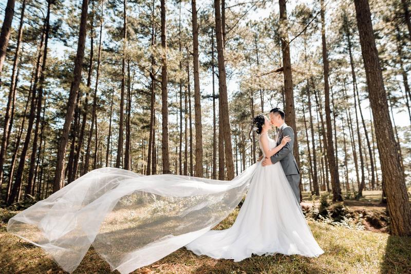 Khu rừng thông thơ mộng ở Đà Nẵng