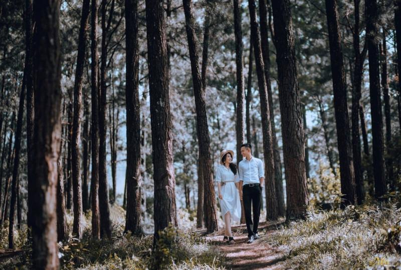 Chụp ảnh cưới tại rừng thông Đà Nẵng
