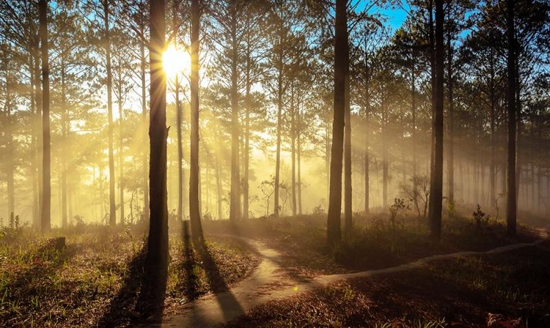 Rừng thông gắn với kỉ niệm thời thơ ấu