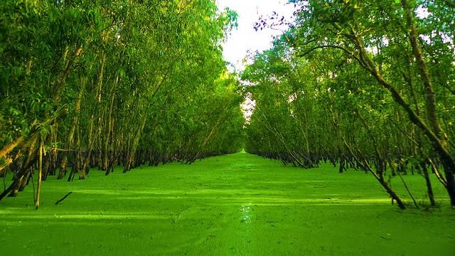 Khung cảnh xanh mướt tại rừng tràm Trà Sư