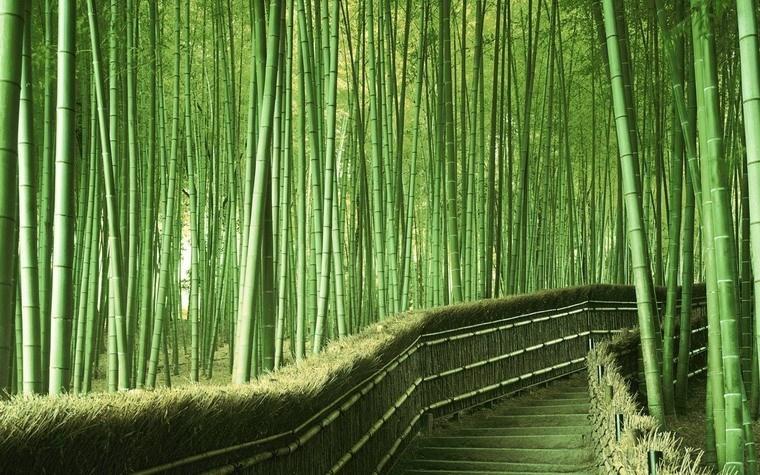 Rừng tre Sagano - Nhật bản