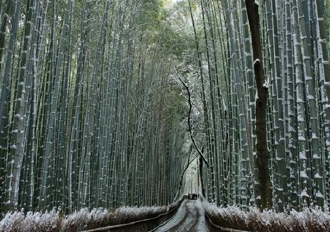 Rừng trúc Sanago, Nhật Bản