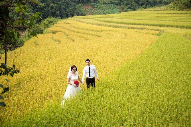 Bộ ảnh cưới đầy lãng mạng của cặp đôi bên những thửa ruộng bậc thang vàng óng