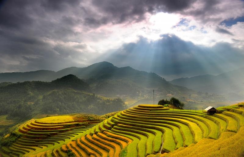 Ruộng bậc thang, Việt Nam