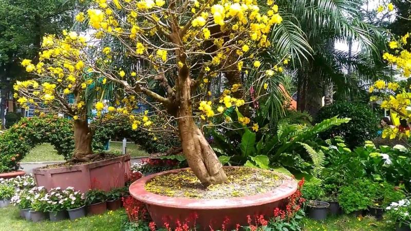 Sài Gòn hoa