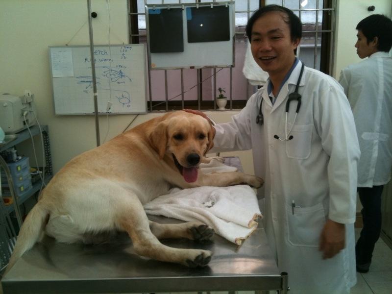 Thú cưng được chăm sóc tại SaiGonPet Clinic