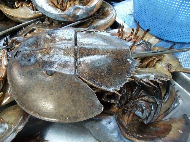 Từ nguyên liệu là thịt sam biển người ta có thể chế biến thành nhiều món như sam biển nướng, súp sam, sam biển hấp…