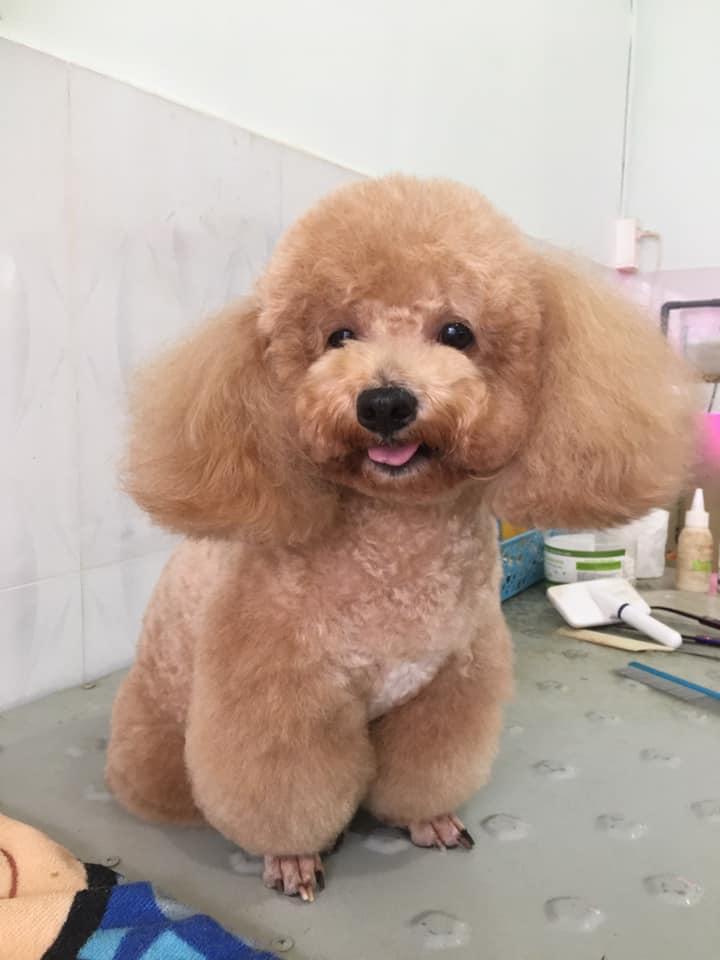Sammy Pet Grooming