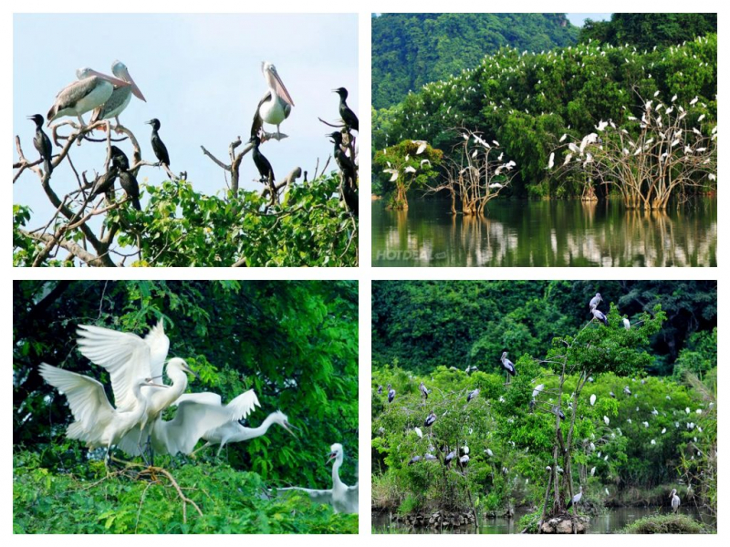 Bac Lieu Bird Park