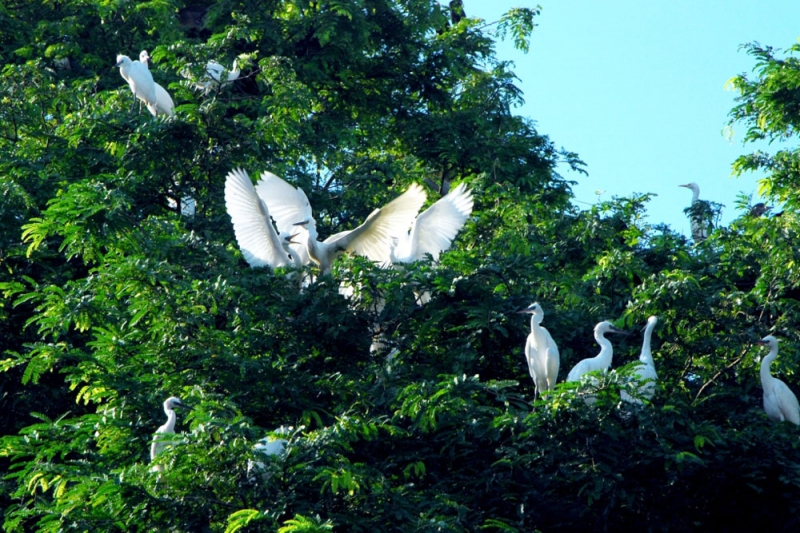 Thiên nhiên tại Sân chim Vàm Hồ