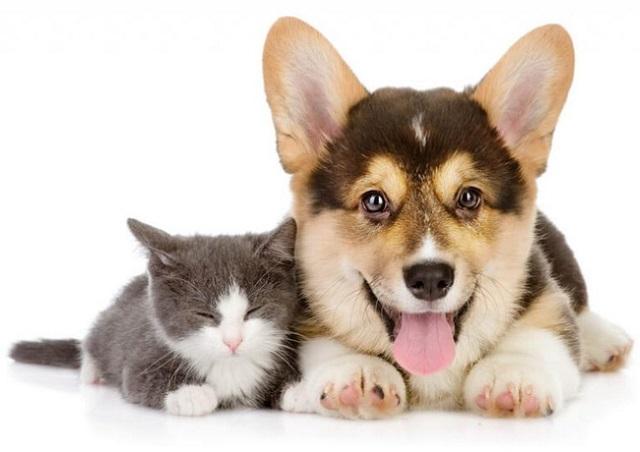 Sản phẩm trị nấm cho chó mèo dạng xịt Davis Chlorhexidine (Ảnh minh họa)