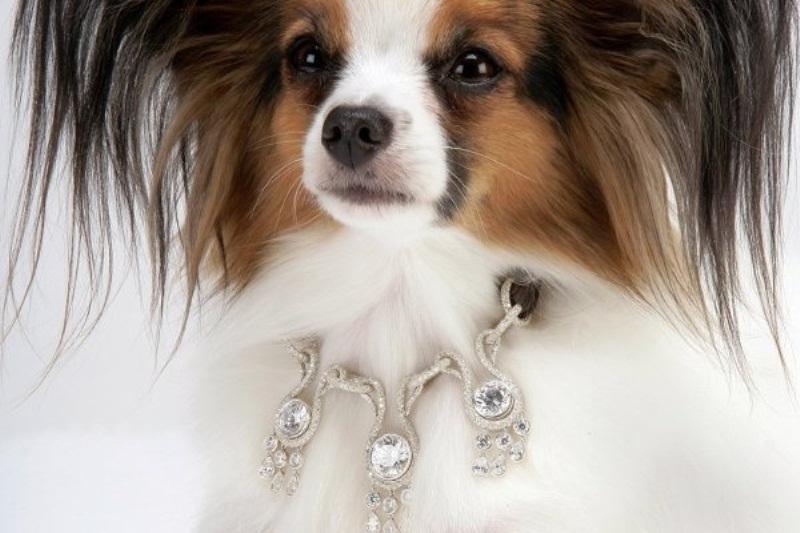 Vòng cổ cho chó Amour Amour: 3.2 triệu USD