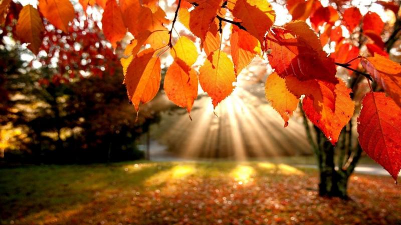 Mùa thu của thiên nhiên