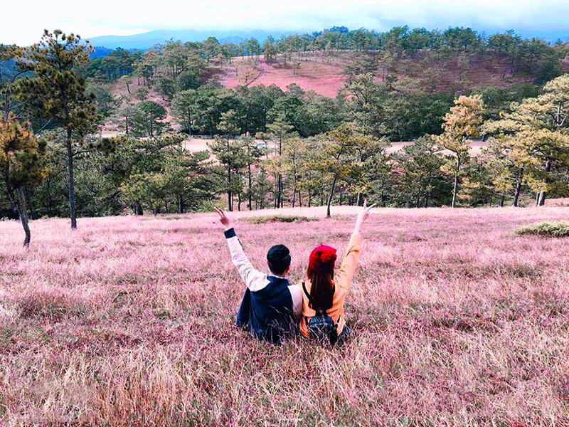 Đồi cỏ hồng Đà Lạt - điểm đến cho những kẻ mộng mơ