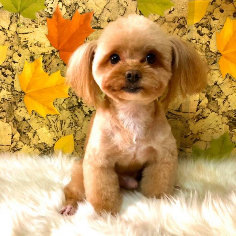 Sasu petshop - Thế giới cho thú cưng của bạn