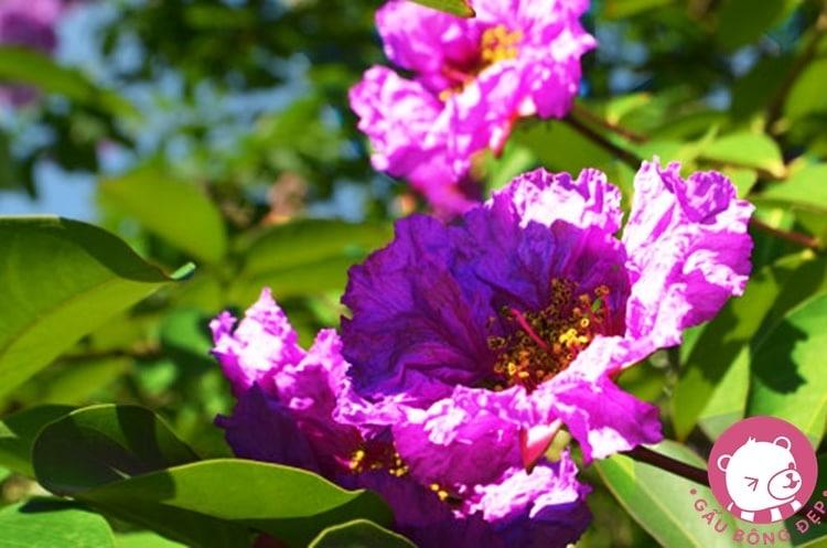 Biết bao thi sĩ gửi lòng vào hương hoa