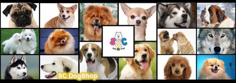 SC Dog Shop cung cấp các giống chó như Chow Chow, Alaska, Poodle, Pom