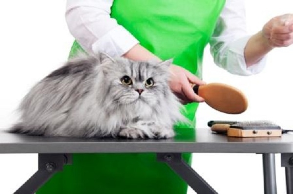 Shop bán phụ kiện cho thú cưng Happy Pet Care