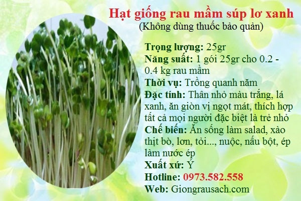 Hạt giống rau mầm súp lơ xanh tại shop hạt giống rau sạch.