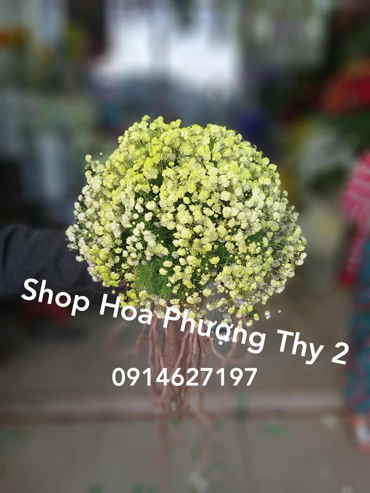 Shop Hoa Phượng Thy 2