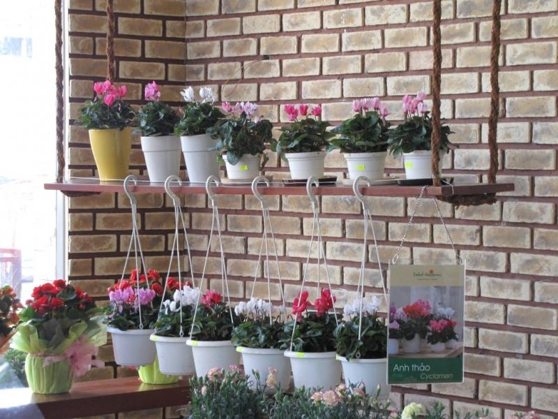 Shop Minh Thư bán rất đa dạng các loại hoa, cả hoa theo bó hoặc trồng trong chậu