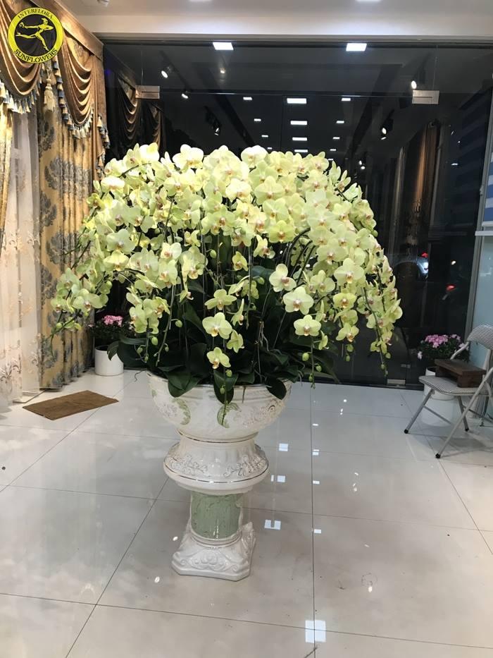SunFlowers hiện là một trong những shop hoa tươi cung cấp hoa Lan Hồ Điệp chậu uy tín và chất lượng, giá cả tốt nhất tại Hải Phòng