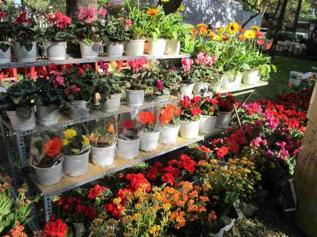 Shop Hoa Tươi Suri còn nhận trang trí hoa tươi cho các sự kiện, tiệc, hội nghị, bên cạnh việc cung cấp lẻ và sỉ số lượng lớn hoa Đà Lạt