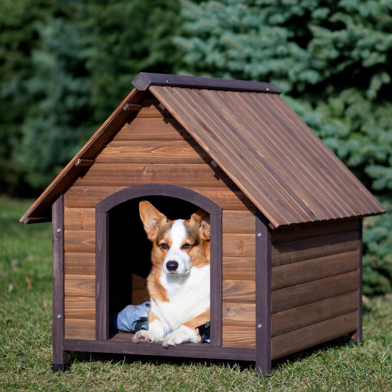 Top 9 Shop phụ kiện cho thú cưng uy tín nhất Quận 10, TP. HCM